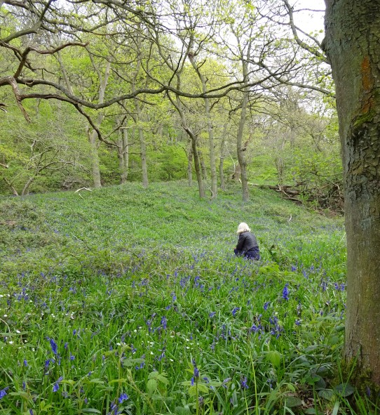 heather in the bluebells.jpg
